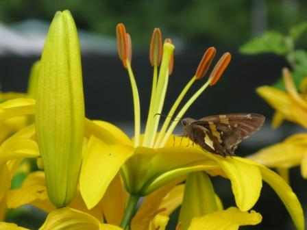 blog_nature_2009 (2)