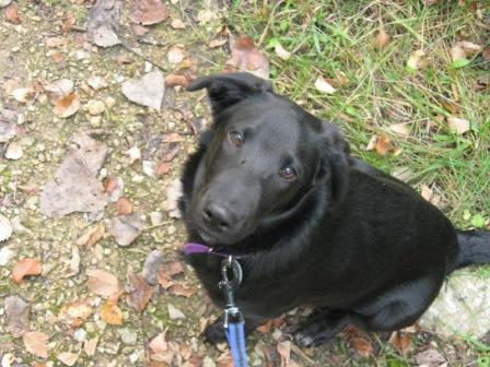 When my dog Sammy was a puppy, 2008