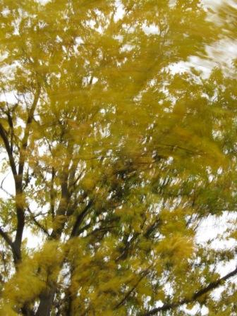 Tree-breeze, Oct. 2012