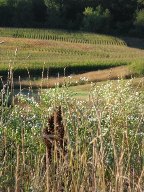 2013_09_13_mh (92)_crop