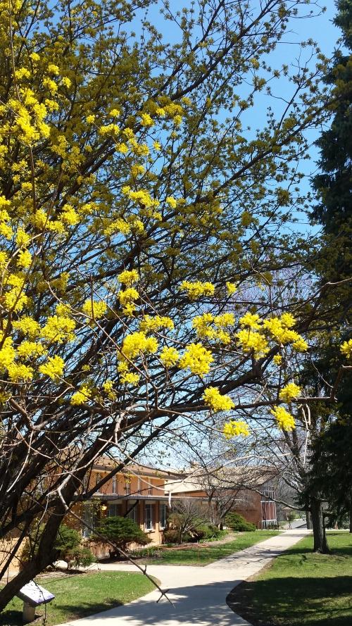 Rockford College University, 11 April 2015