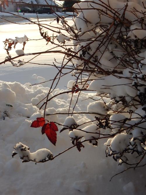 Snow, 21 Nov. 2015