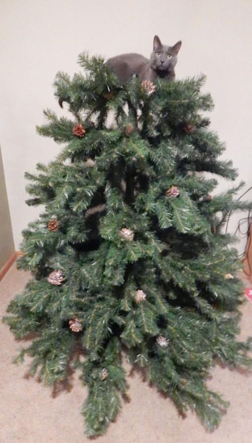 A feline tree-topper
