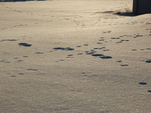 Snow tracks.