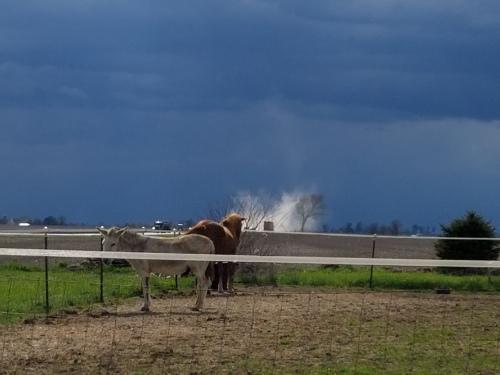 Donkey, horse, dust cloud. 21 April.