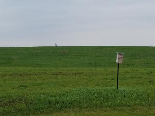 Prairie grows back after spring burn. 29 April.