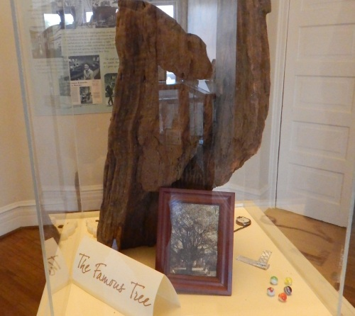A piece of the oak tree that was the model for the oak tree near the Radley house in the book.
