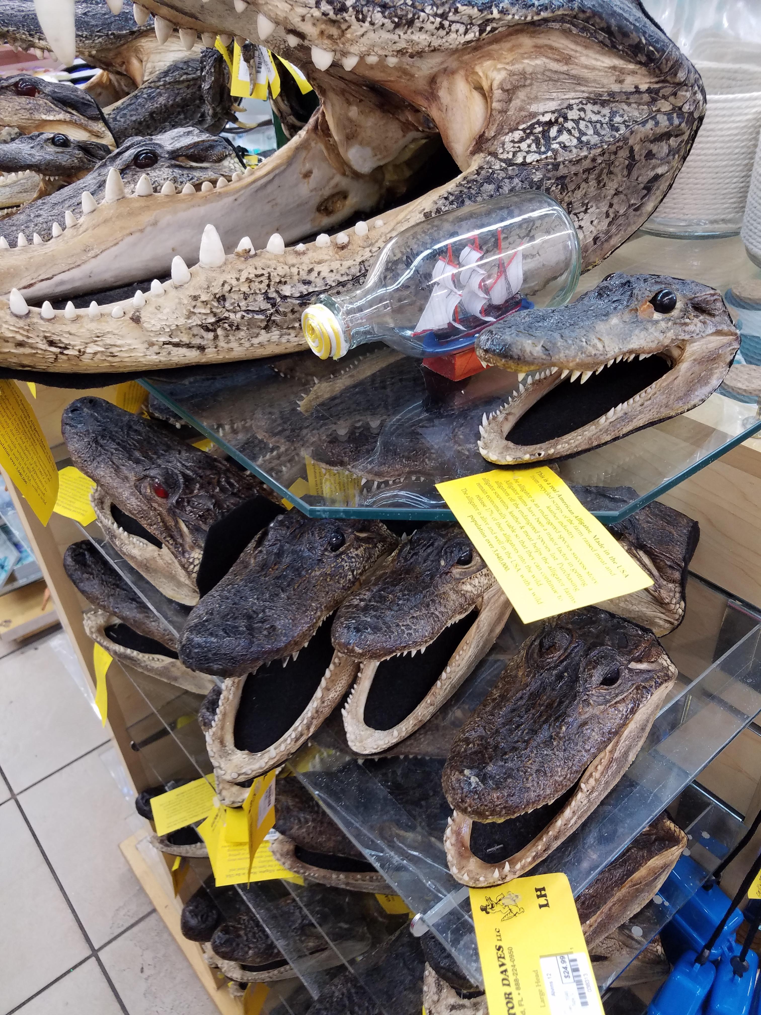 Alligator heads at Alvin's Island store.