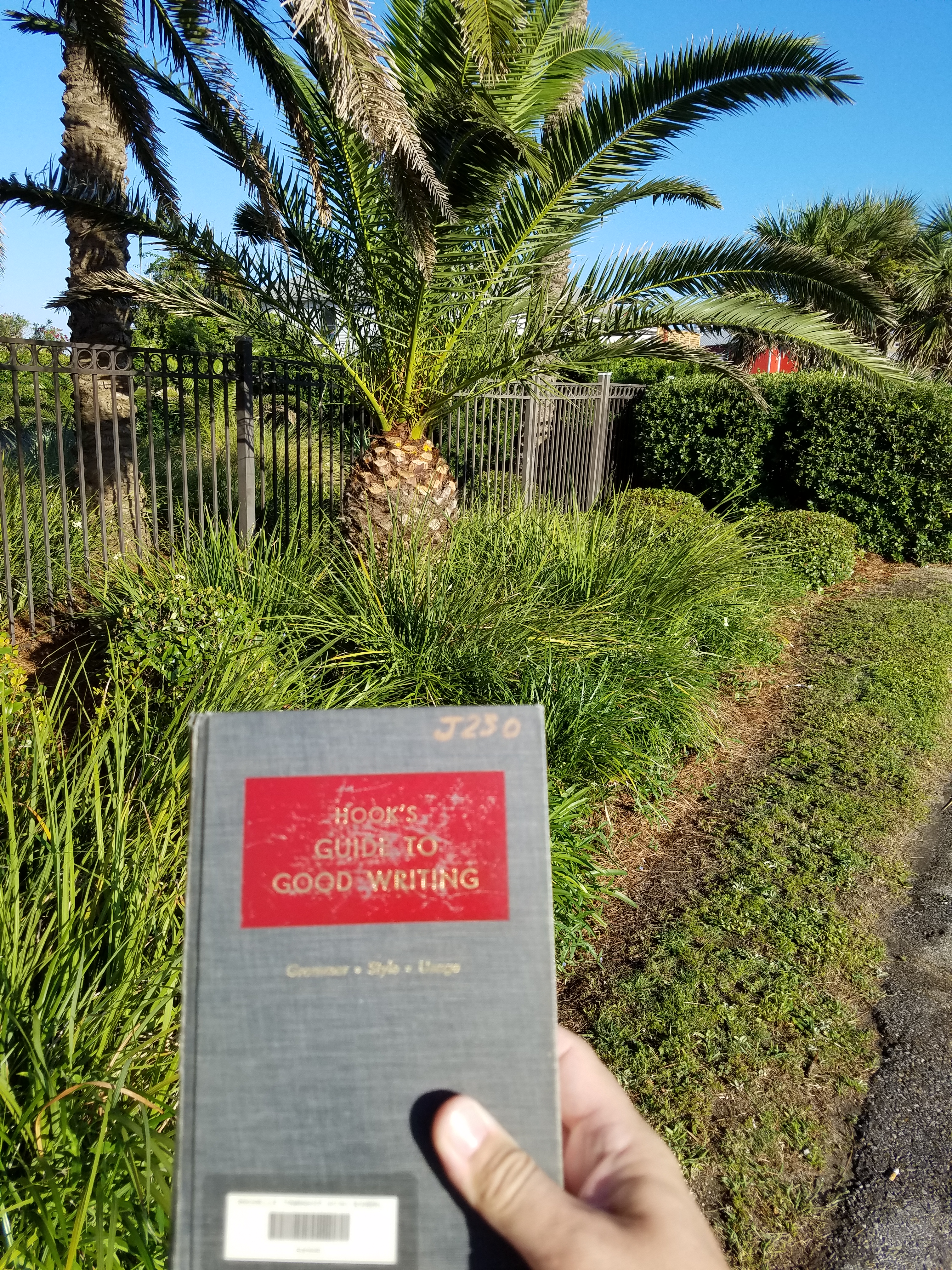 My journal in front of a palm tree