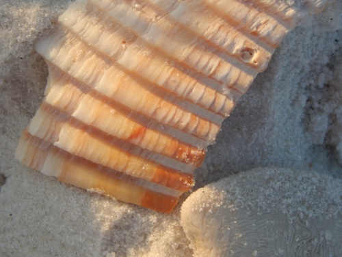 A beach corrugation with white sand.