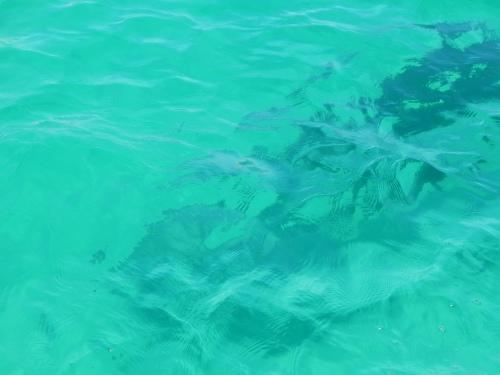 A dolphin.