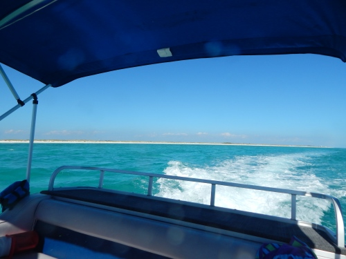 View of Shell Island near Panama City Beach from the back of the pontoon boat from which we sought dolphins.