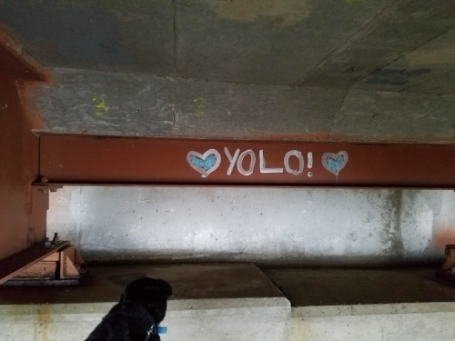 "My dog and ""YOLO!"" under bridge."