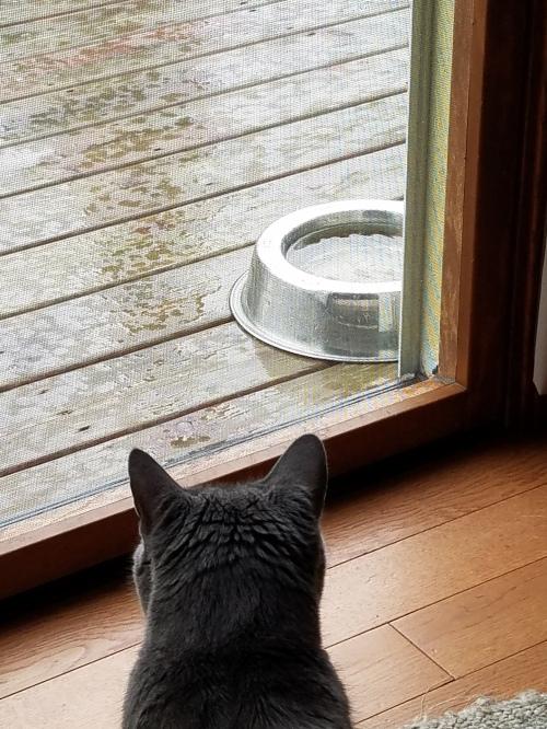 Justice cat, rainy day.