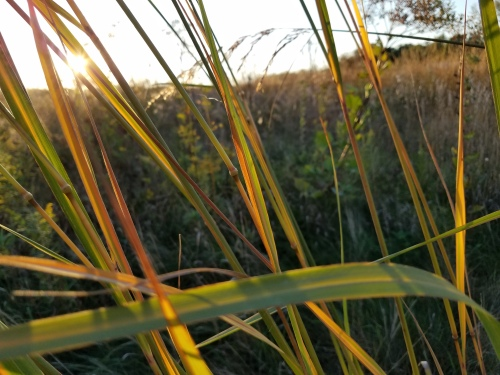 Grass at prairie. 28 Sept.