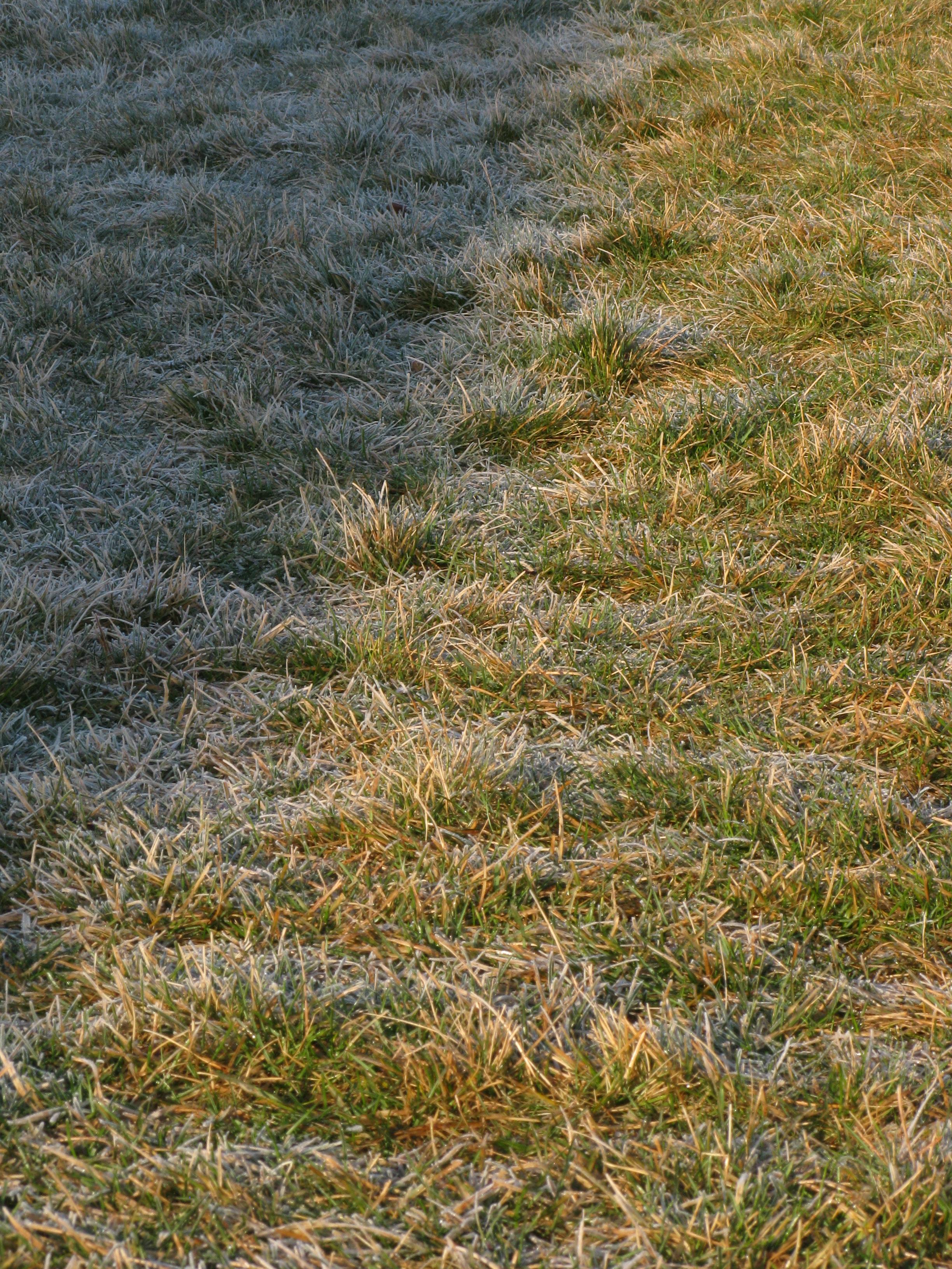 Shadow frost. 23 Nov. 2011