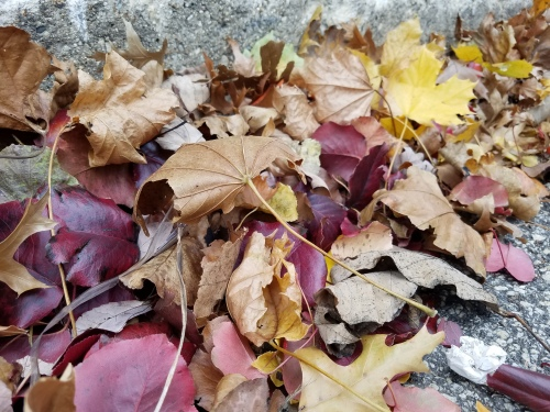 Gutter leaves. 19 Nov.
