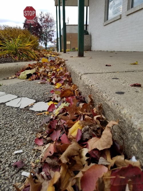 Leaves outside the gutter on a windy morning. 19 Nov.