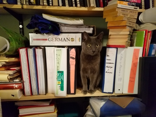 My cat shelved himself. 25 Nov. 2016