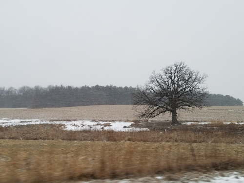 Ogle County snow pastoral. 9 Jan.