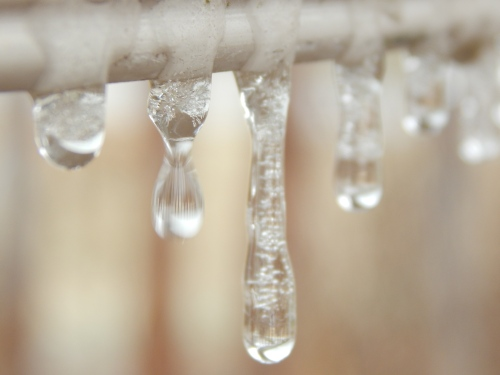 Icicle drips. 16 Jan.