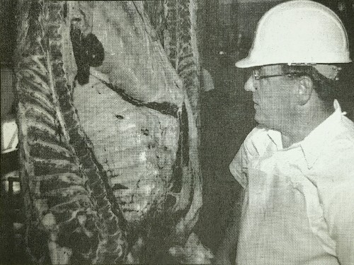 Illinois Department of Agriculture meat inspector Jim Reinhart examines the carcass of a freshly killed animal while its still on the processing floor. Beef 2000 participants observed as Reinhart looked for lesions and signs of disease in the animal's glandular system, lungs, liver, and other parts, as well as inspecting the carcass for cleanliness. (Caption as published.)