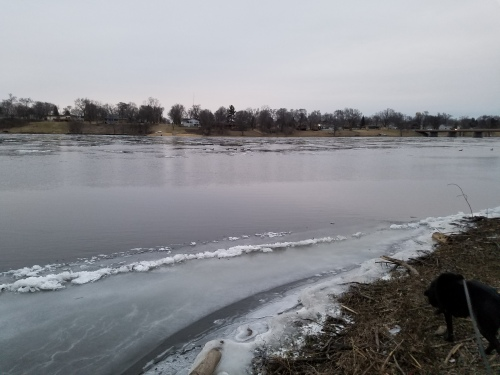 Ice floes and geese in the Rock River at Byron. 4 Feb.